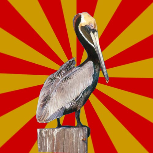 glorifiedpelican